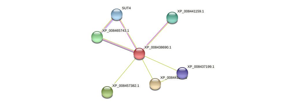 XP_008438690.1 protein (Cucumis melo) - STRING interaction network