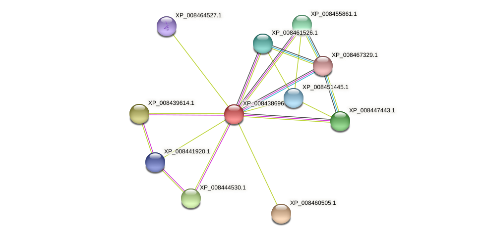 XP_008438696.1 protein (Cucumis melo) - STRING interaction network
