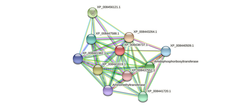 XP_008438737.1 protein (Cucumis melo) - STRING interaction network