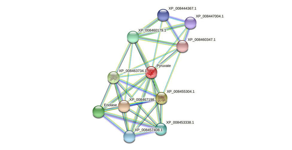 XP_008438755.1 protein (Cucumis melo) - STRING interaction network