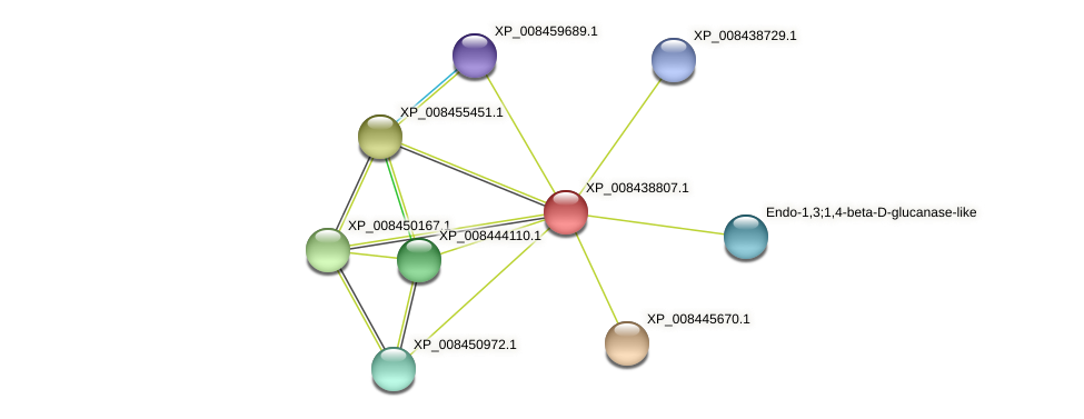 XP_008438807.1 protein (Cucumis melo) - STRING interaction network