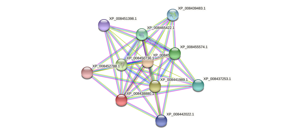 XP_008438880.1 protein (Cucumis melo) - STRING interaction network