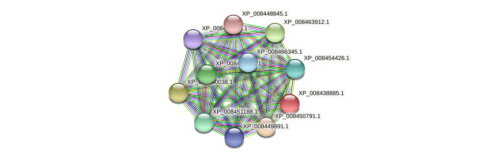 XP_008438885.1 protein (Cucumis melo) - STRING interaction network