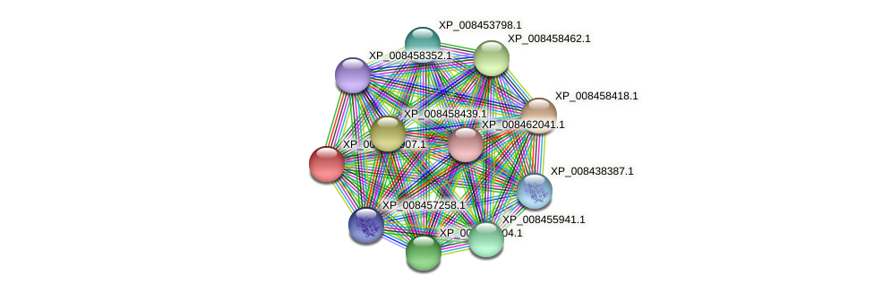 XP_008438907.1 protein (Cucumis melo) - STRING interaction network
