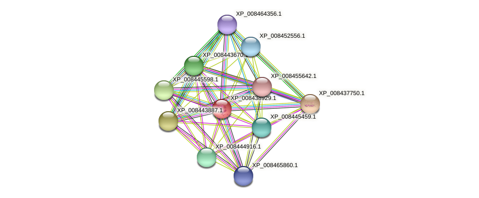 XP_008438929.1 protein (Cucumis melo) - STRING interaction network