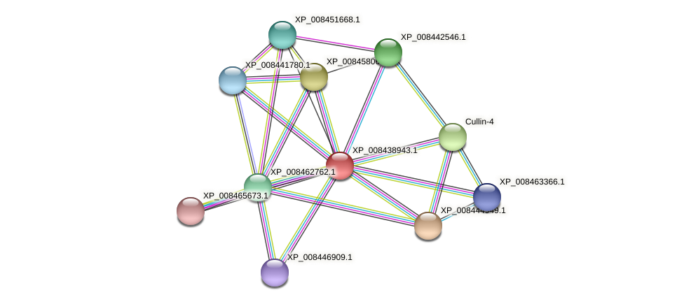 XP_008438943.1 protein (Cucumis melo) - STRING interaction network