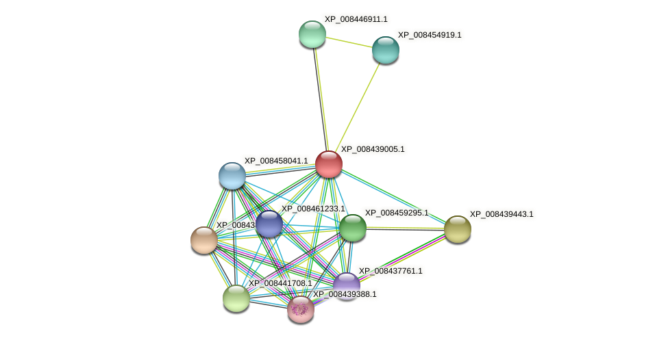 XP_008439005.1 protein (Cucumis melo) - STRING interaction network