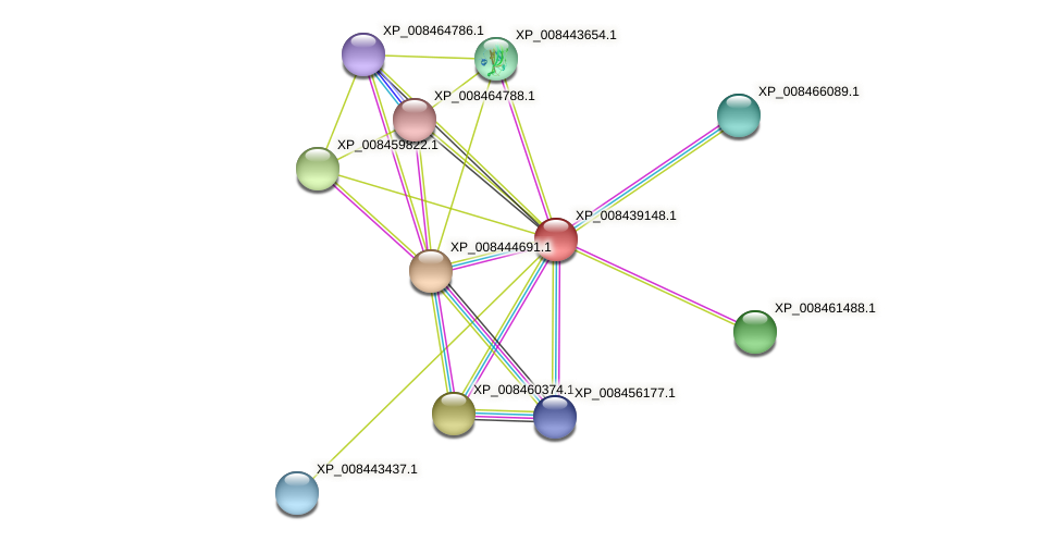 XP_008439148.1 protein (Cucumis melo) - STRING interaction network