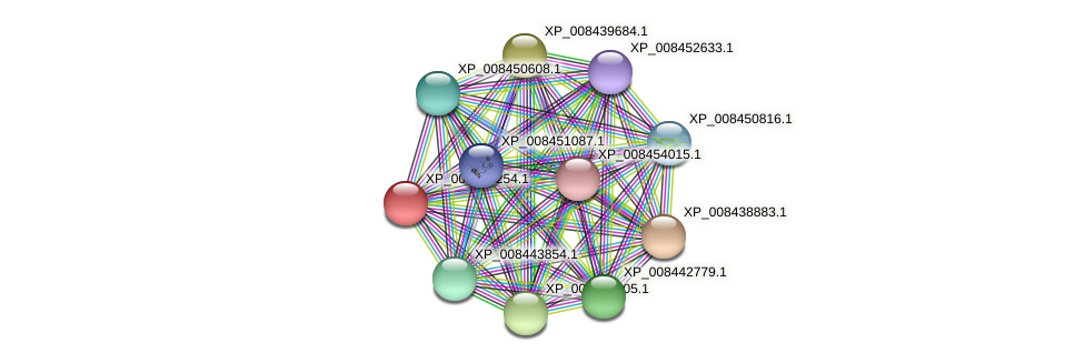 XP_008439254.1 protein (Cucumis melo) - STRING interaction network