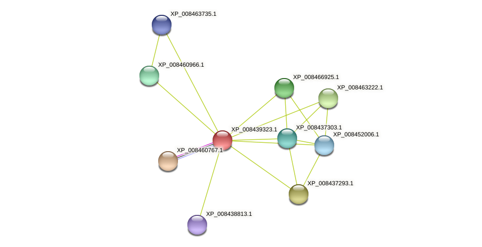 XP_008439323.1 protein (Cucumis melo) - STRING interaction network