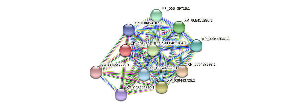 XP_008439346.1 protein (Cucumis melo) - STRING interaction network