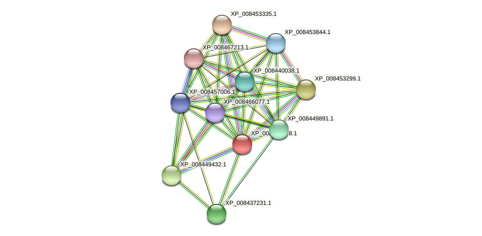 XP_008439478.1 protein (Cucumis melo) - STRING interaction network