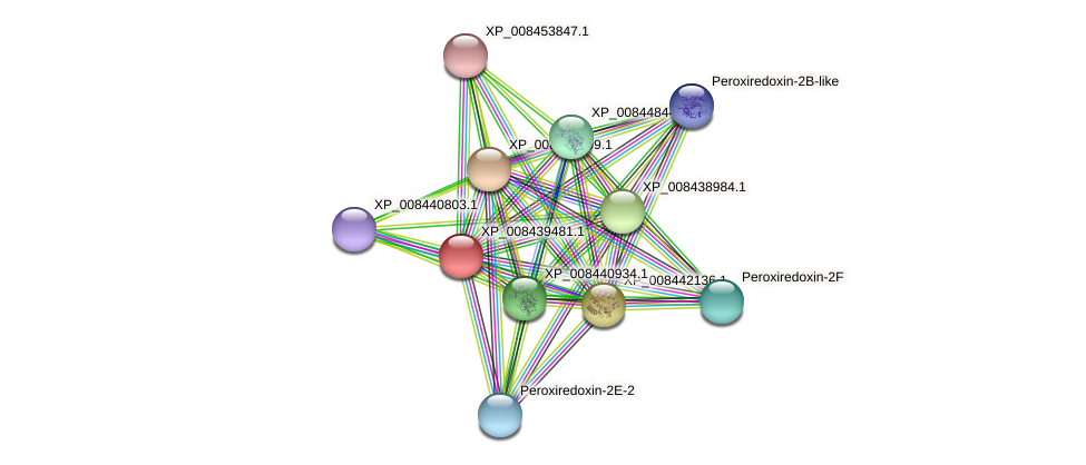 XP_008439481.1 protein (Cucumis melo) - STRING interaction network