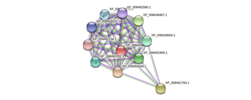 XP_008439484.1 protein (Cucumis melo) - STRING interaction network