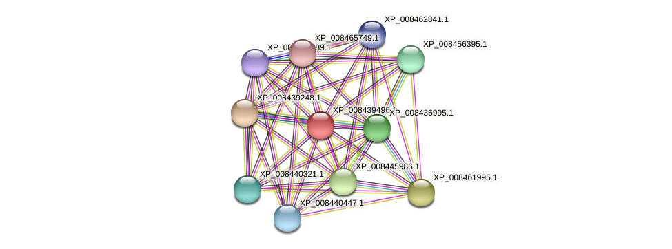 XP_008439496.1 protein (Cucumis melo) - STRING interaction network