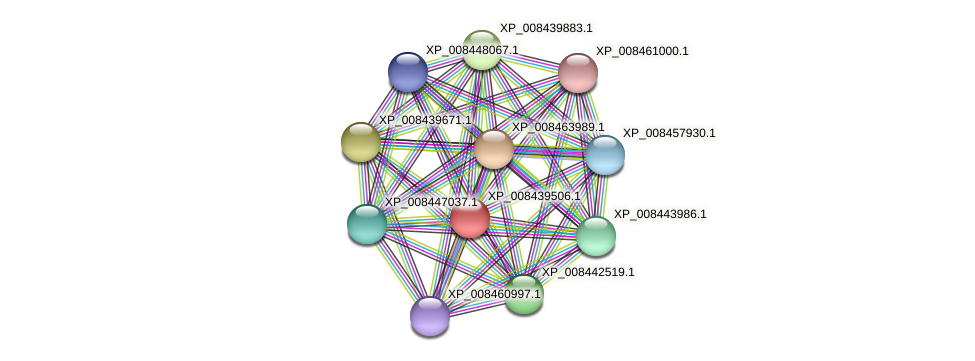 XP_008439506.1 protein (Cucumis melo) - STRING interaction network