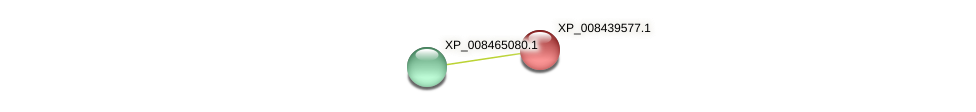 XP_008439577.1 protein (Cucumis melo) - STRING interaction network