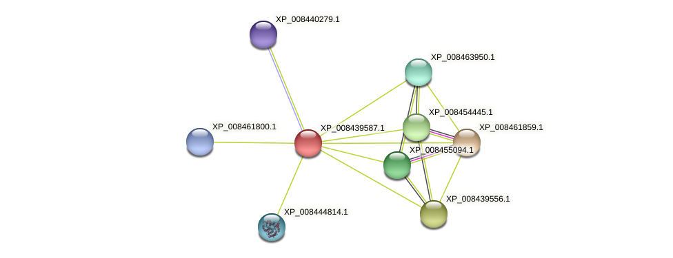 XP_008439587.1 protein (Cucumis melo) - STRING interaction network