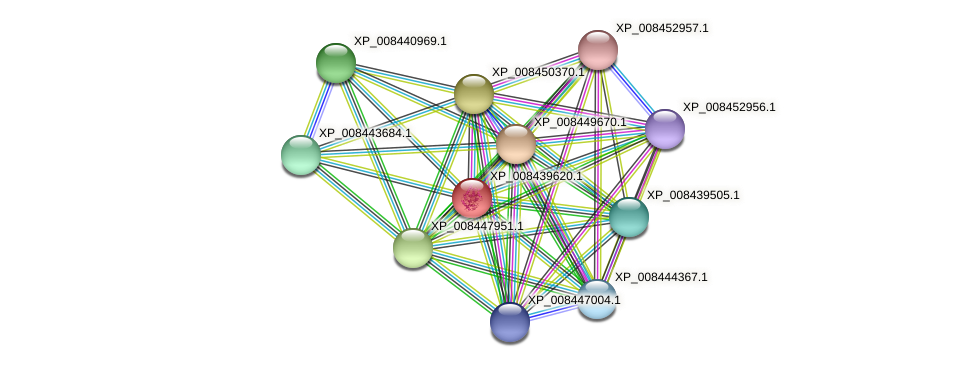 XP_008439620.1 protein (Cucumis melo) - STRING interaction network