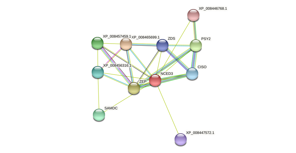 NCED3 protein (Cucumis melo) - STRING interaction network