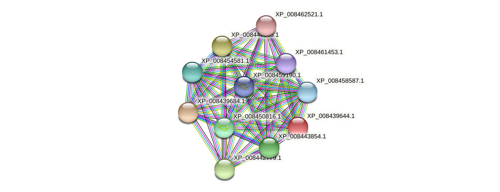 XP_008439644.1 protein (Cucumis melo) - STRING interaction network