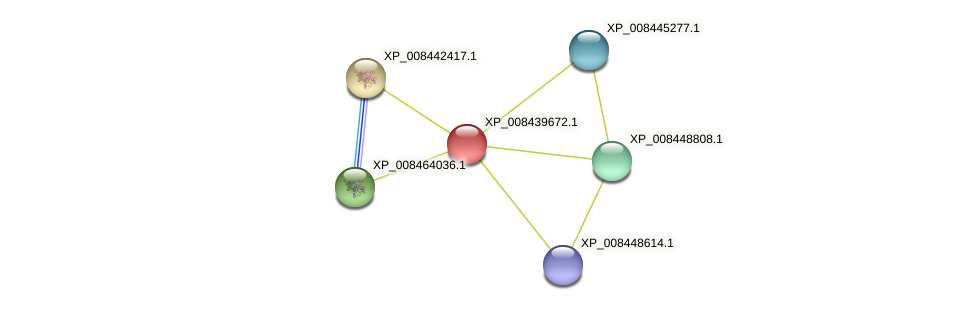 XP_008439672.1 protein (Cucumis melo) - STRING interaction network