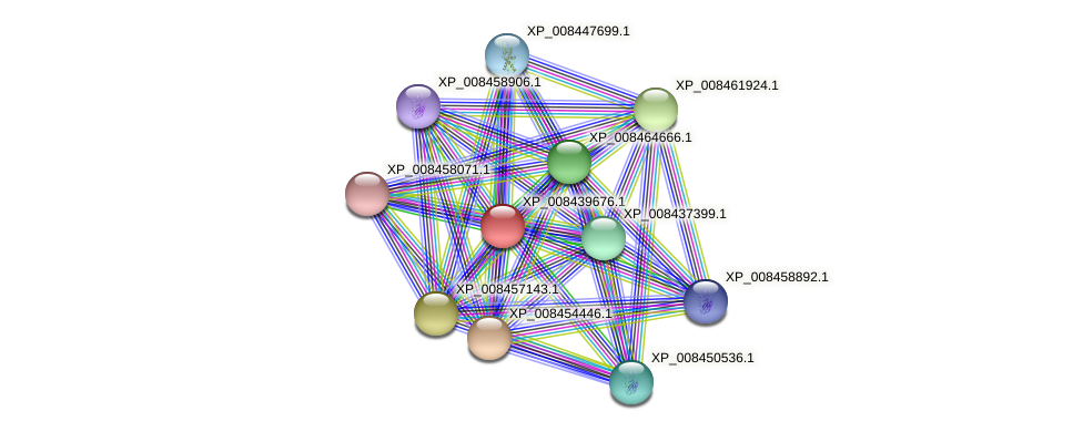 XP_008439676.1 protein (Cucumis melo) - STRING interaction network
