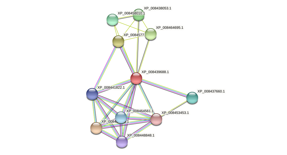 XP_008439688.1 protein (Cucumis melo) - STRING interaction network