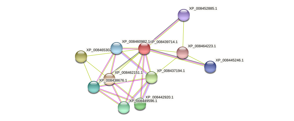 XP_008439714.1 protein (Cucumis melo) - STRING interaction network