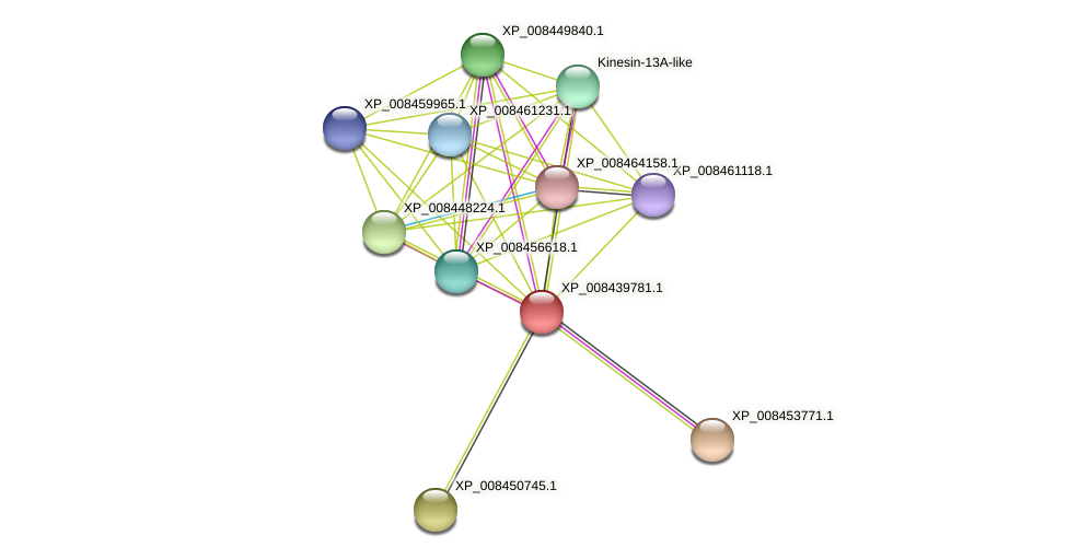 XP_008439781.1 protein (Cucumis melo) - STRING interaction network