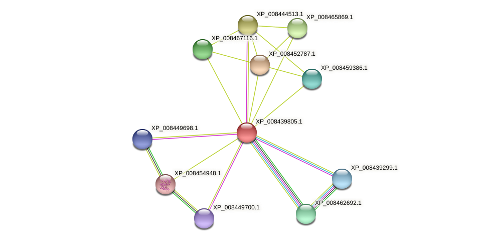 XP_008439805.1 protein (Cucumis melo) - STRING interaction network