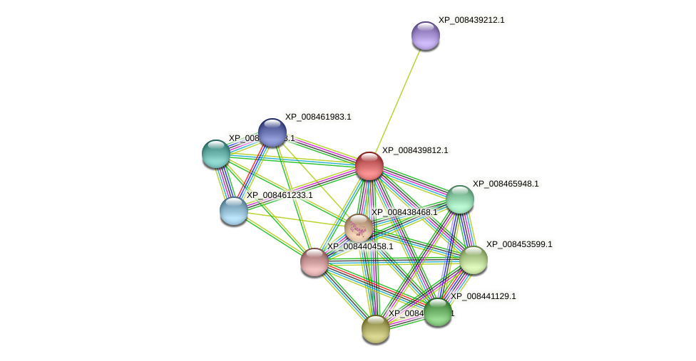 XP_008439812.1 protein (Cucumis melo) - STRING interaction network