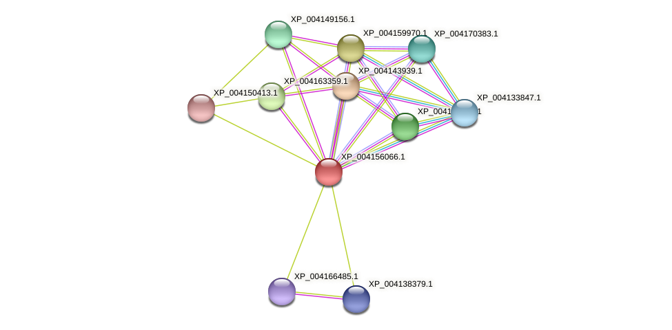 XP_004156066.1 protein (Cucumis sativus) - STRING interaction network