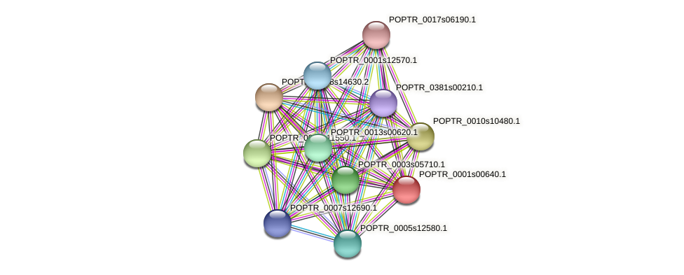 POPTR_0001s00640.1 protein (Populus trichocarpa) - STRING interaction network