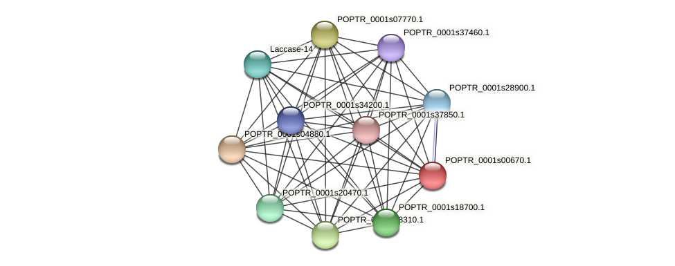POPTR_0001s00670.1 protein (Populus trichocarpa) - STRING interaction network