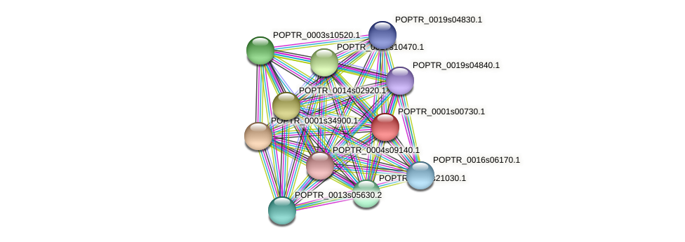 POPTR_0001s00730.1 protein (Populus trichocarpa) - STRING interaction network