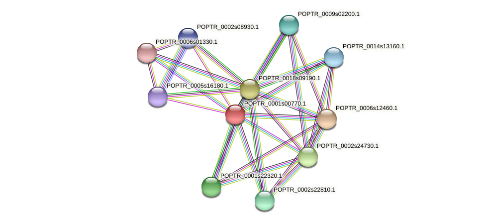 POPTR_0001s00770.1 protein (Populus trichocarpa) - STRING interaction network
