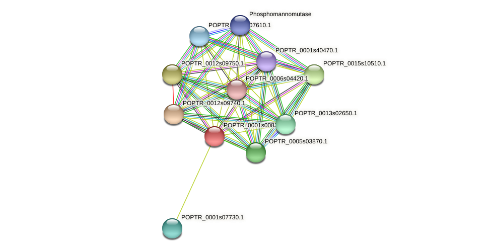 POPTR_0001s00830.1 protein (Populus trichocarpa) - STRING interaction network