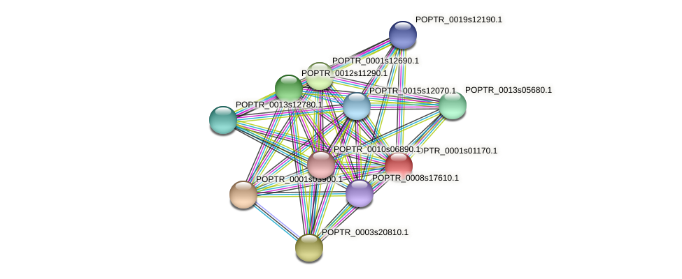 POPTR_0001s01170.1 protein (Populus trichocarpa) - STRING interaction network