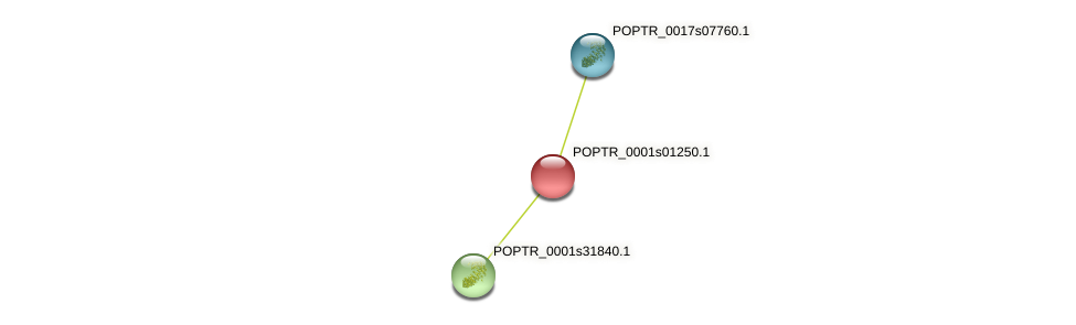 POPTR_0001s01250.1 protein (Populus trichocarpa) - STRING interaction network