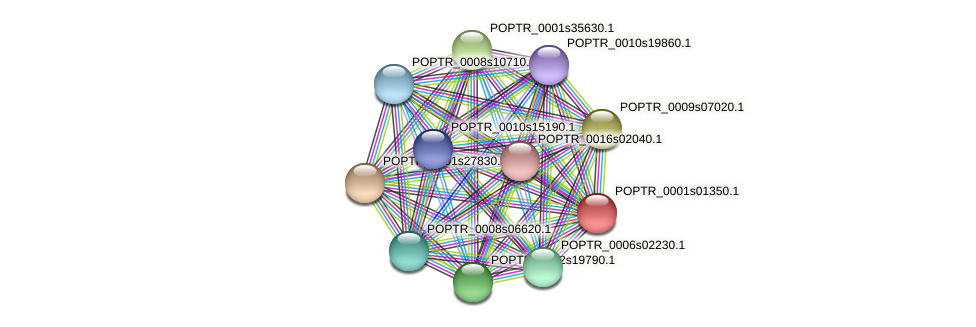 POPTR_0001s01350.1 protein (Populus trichocarpa) - STRING interaction network
