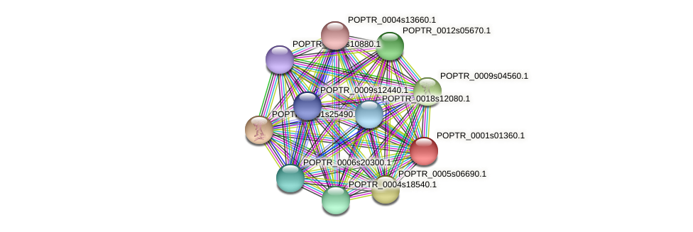 POPTR_0001s01360.1 protein (Populus trichocarpa) - STRING interaction network