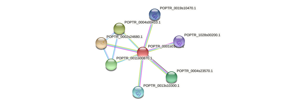 POPTR_0001s01670.1 protein (Populus trichocarpa) - STRING interaction network