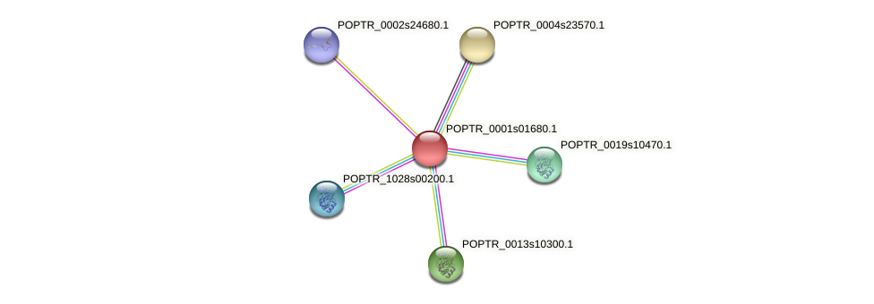 POPTR_0001s01680.1 protein (Populus trichocarpa) - STRING interaction network