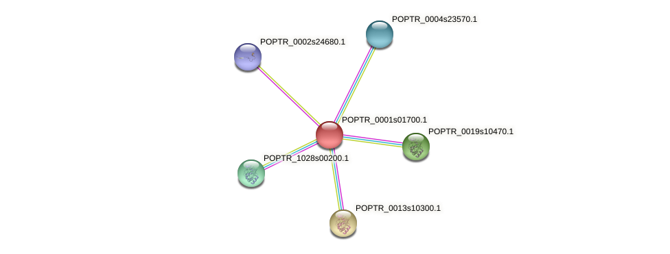 POPTR_0001s01700.1 protein (Populus trichocarpa) - STRING interaction network