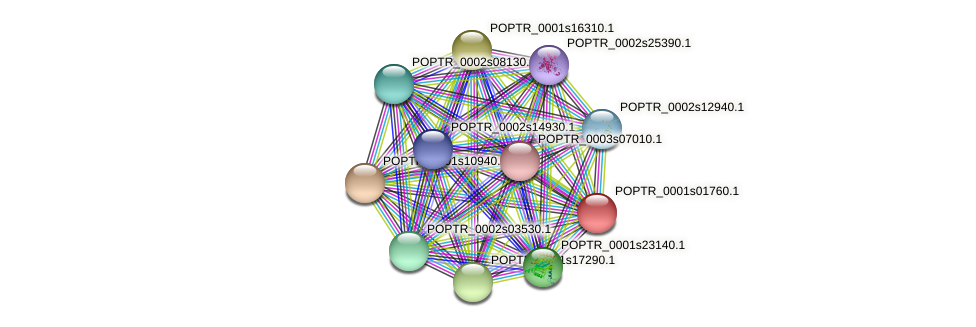 POPTR_0001s01760.1 protein (Populus trichocarpa) - STRING interaction network
