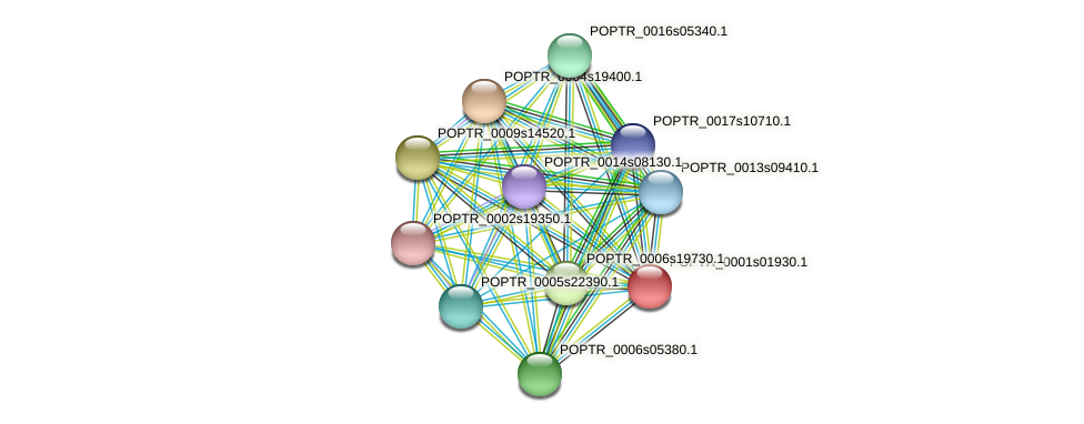 POPTR_0001s01930.1 protein (Populus trichocarpa) - STRING interaction network