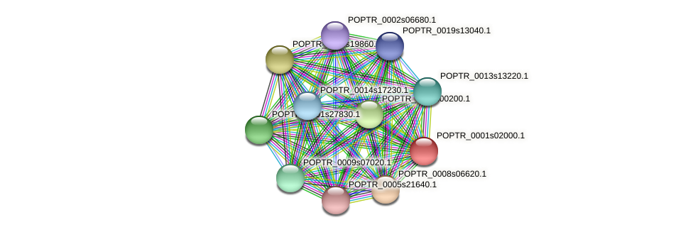 POPTR_0001s02000.1 protein (Populus trichocarpa) - STRING interaction network