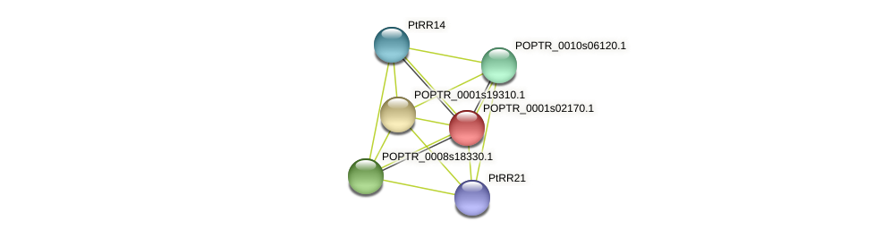 POPTR_0001s02170.1 protein (Populus trichocarpa) - STRING interaction network