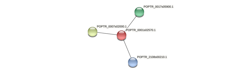 POPTR_0001s02570.1 protein (Populus trichocarpa) - STRING interaction network